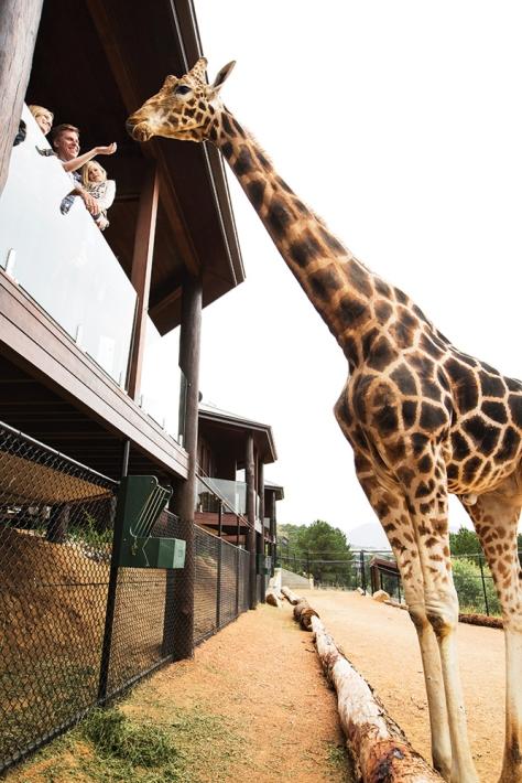 Giraffe Treehouses